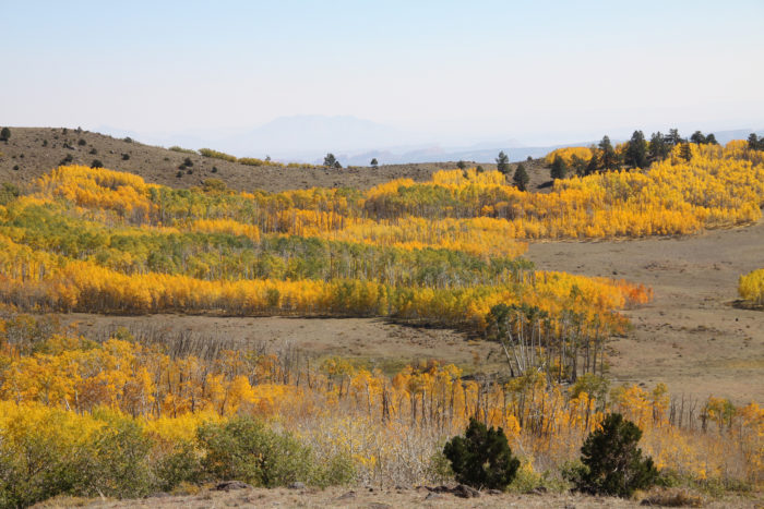Boulder Mountain is gorgeous dressed in fall colors.