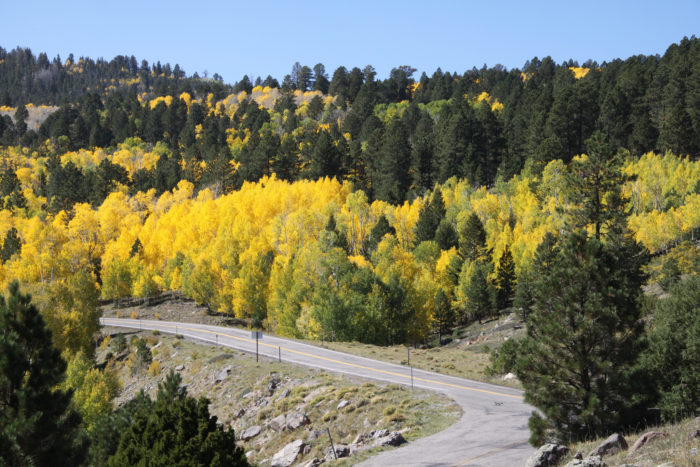 Drive along Scenic Hwy 12, which takes you though some of the forest's most beautiful scenery.