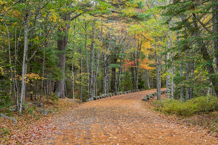 Lastly, one of the reasons we love Acadia hikes is the numerous options for people of all ability levels.