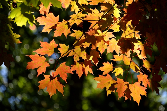 3. Say that you've seen more beautiful leaves elsewhere