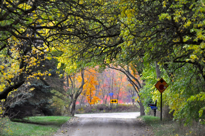 This fall would be a particularly beautiful time to check out the Osage Orange Tunnel, as the fall foliage will likely make it even more magical.