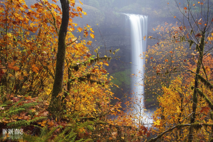 Last but not least, make a stop at the amazing Silver Falls State Park.