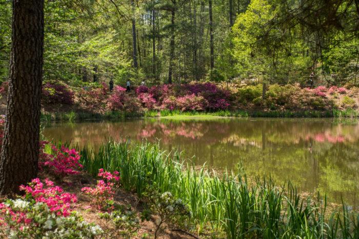 6. Pine Mountain to Callaway Gardens Loop