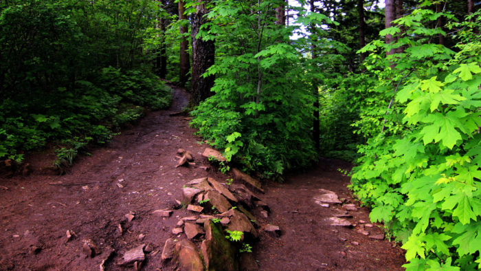 As you walk, you'll ascend numerous switchbacks through the gorgeous forest.