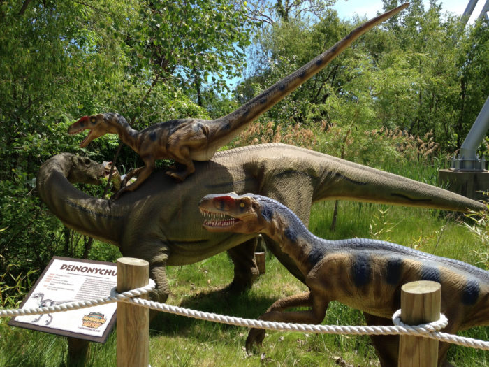 The dinosaurs were designed based on the latest paleontological knowledge, so the park is an educational experience as well. (And many of the life-size models move―some of which, you can actually control.)
