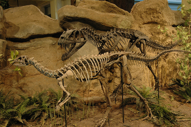 8. Carnegie Museum of Natural History