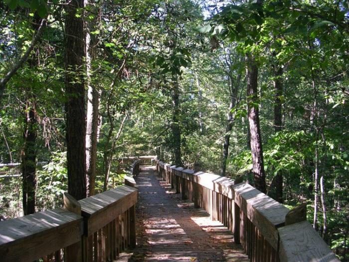 9. Chautauqua Park Tree Top Hiking Trail, Crystal Springs