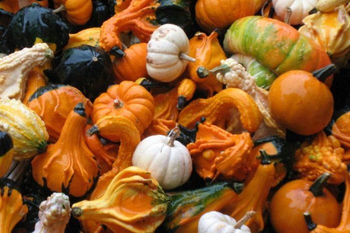 Kerber dairy pumpkin patch