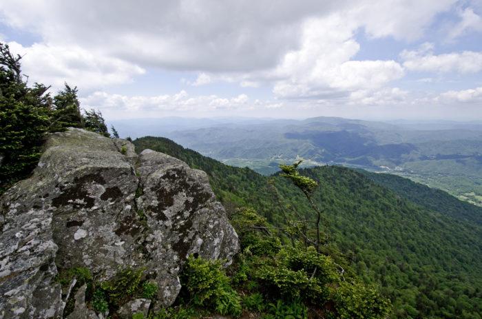 10. Cloudland Trail, Roan Mountain