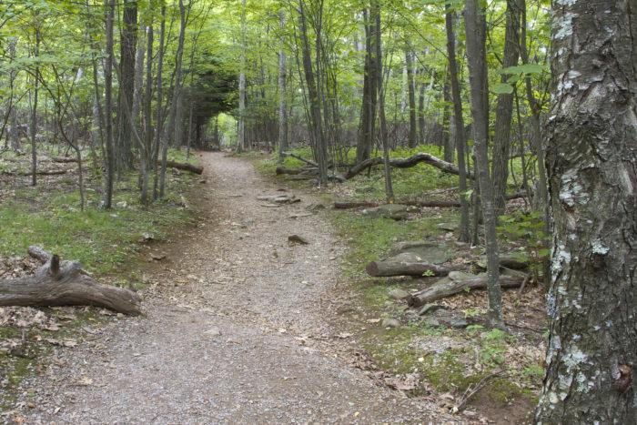 5. Stonyman Trail (Luray)