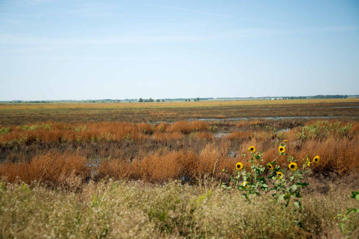 Located in central Kansas, Cheyenne Bottoms is the largest wetland in the country, spanning a whopping 41,000 acres!