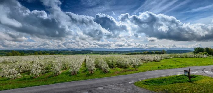 9.  Sunrise Orchards, Cornwall