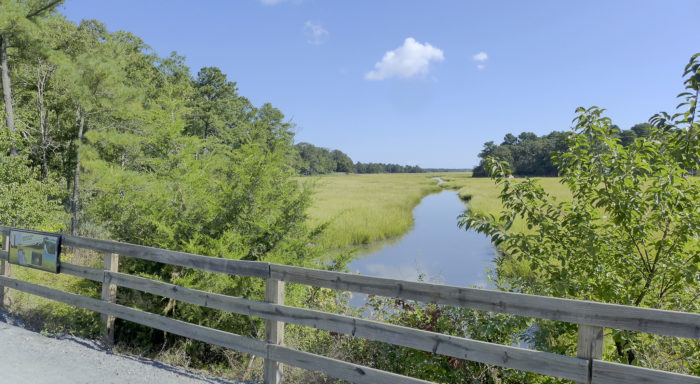 This is one of the most diverse hikes in Delaware, and it's perfect in almost any weather.