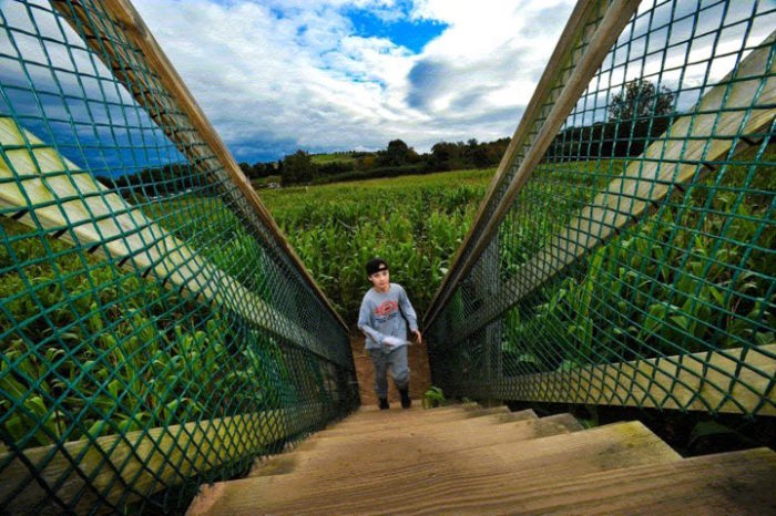 9. Be-A-Mazed Corn Maze, Montgomery
