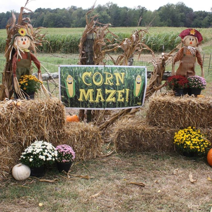 7. The Belue Place Corn Maze - Lexington, AL