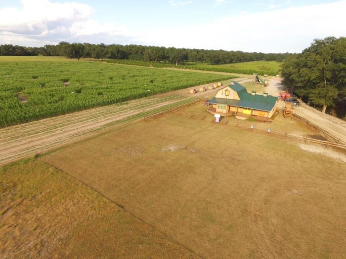 5. CornDodgers Farm Corn Maze - Headland, AL