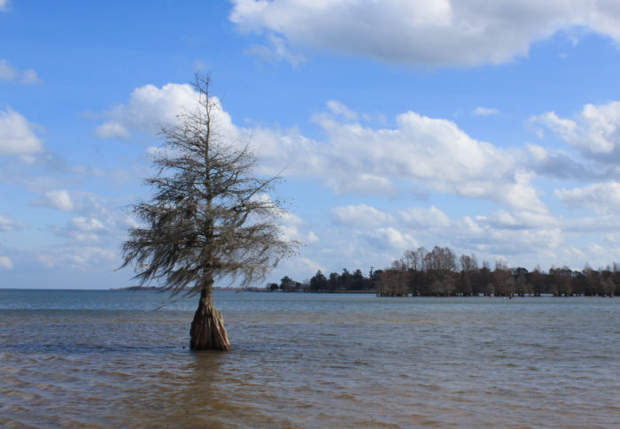 """It may not be as large as Lake Superior, or Lake Huron, or Lake Michigan, but South Carolina's Lake Marion is indeed known as the """"inland sea."""""""
