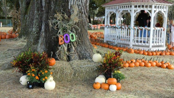 4. Painted Oaks Academy Pumpkin Patch and Pumpkin & Ponies Festival, Orlando