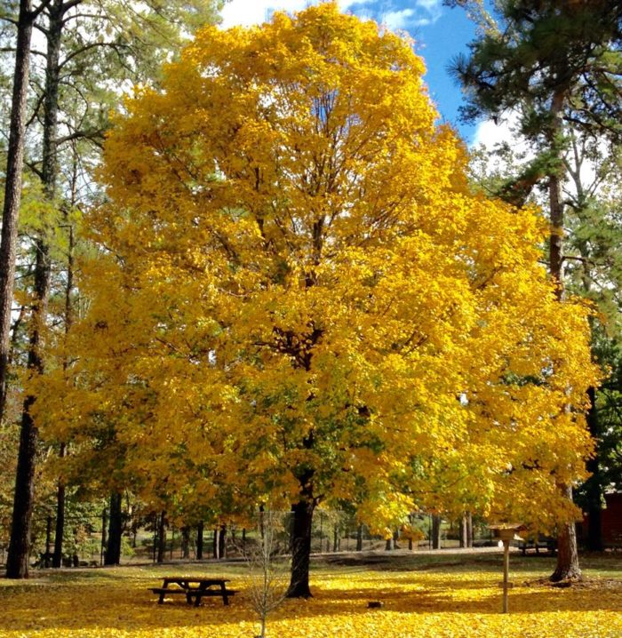 6. Noccalula Falls Park - Gadsden, AL