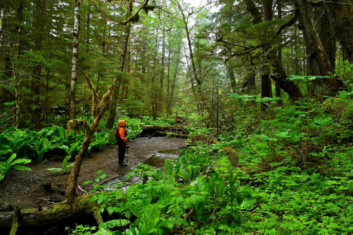 2. Tongass National Forest