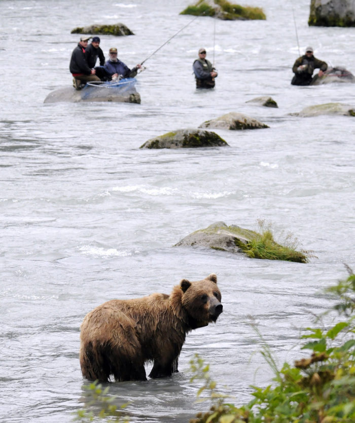 4. When you get super excited about an awesome new fishing spot, only to have a bear steal it from you.