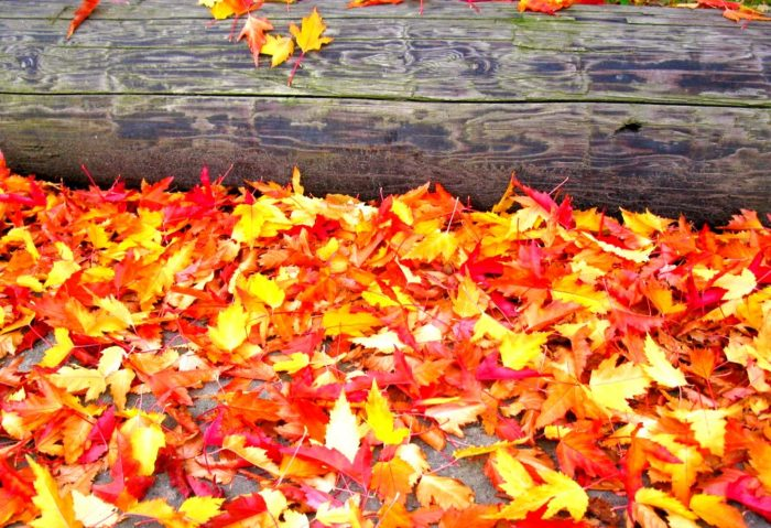 2. The leaves will begin to change colors and fall off the trees.