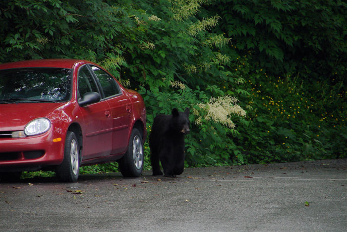 12. When you go for a hike and come back to your car, only to realize that you're now encroaching on bear territory.