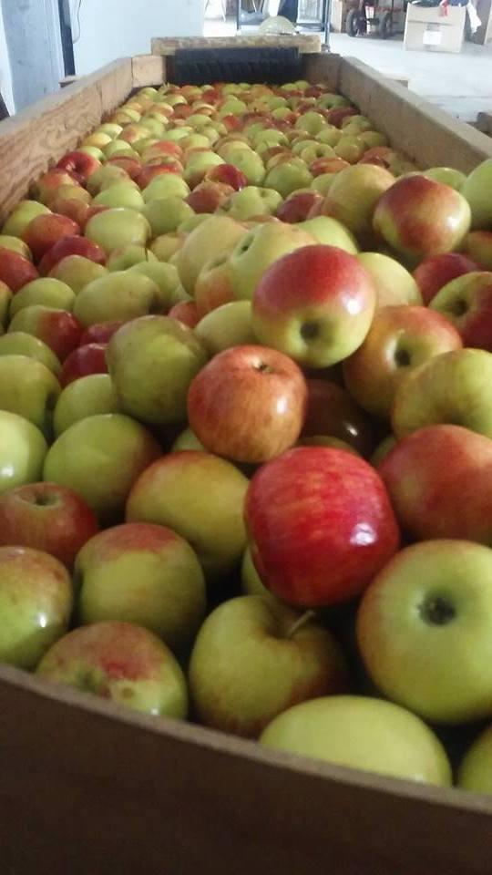 Gardener's Orchard 2