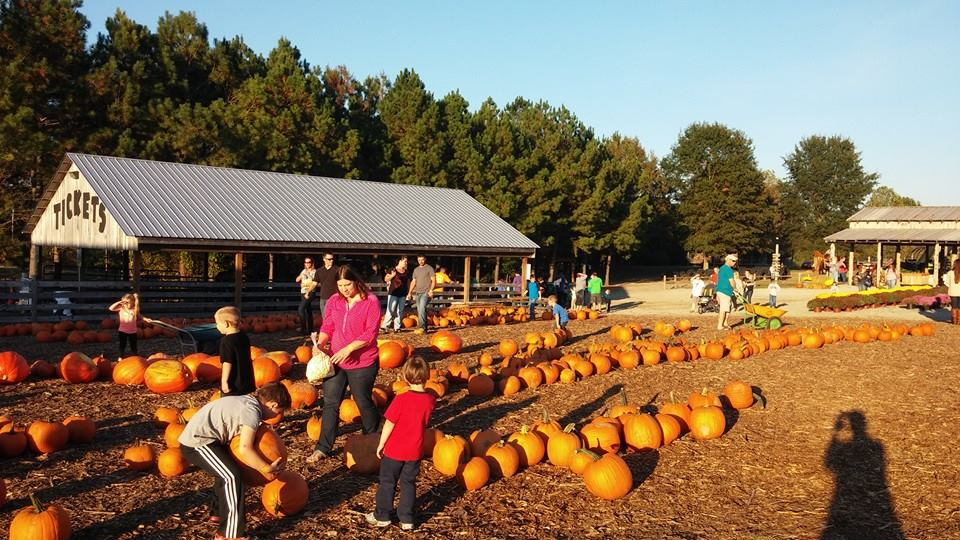 4 best pumpkin patches near nashville in 2016