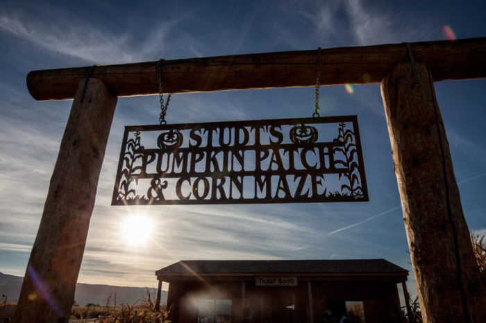 8. Studt's Pumpkin Patch and Corn Maze (Grand Junction)