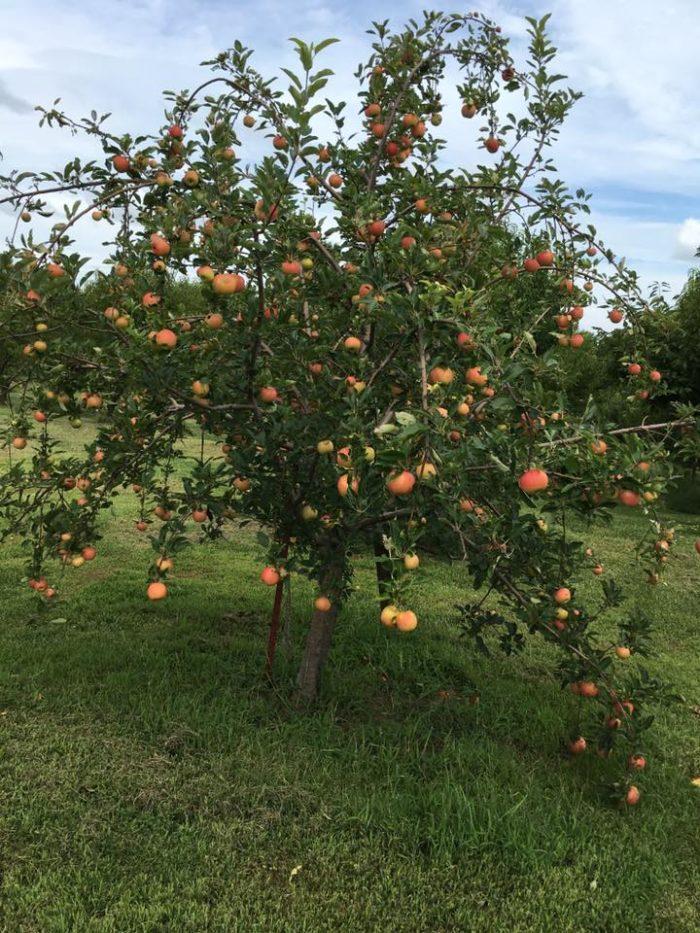5. John & Linda's U-Pick Fruit & Berry Farm - Bates City