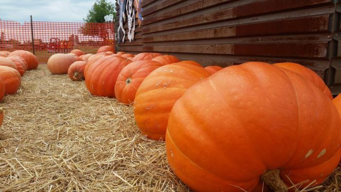 5. Lendt's Pumpkin Patch