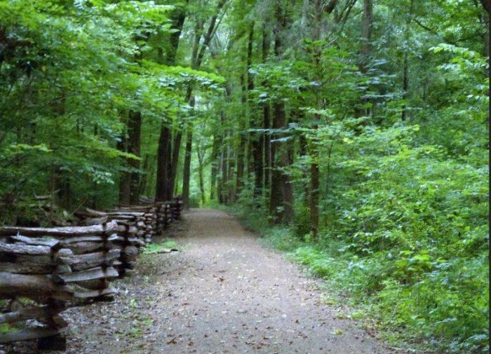 5. Lincoln Park Loop Trail