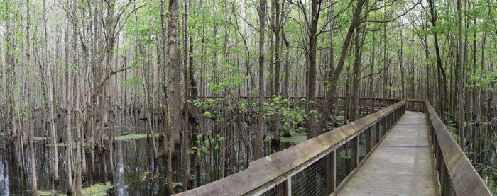 5. Louisiana Purchase Boardwalk (Louisiana Purchase State Park)
