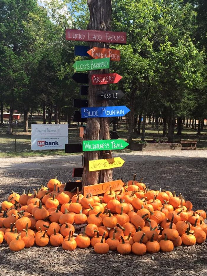 4 Best Pumpkin Patches Near Nashville In 2016