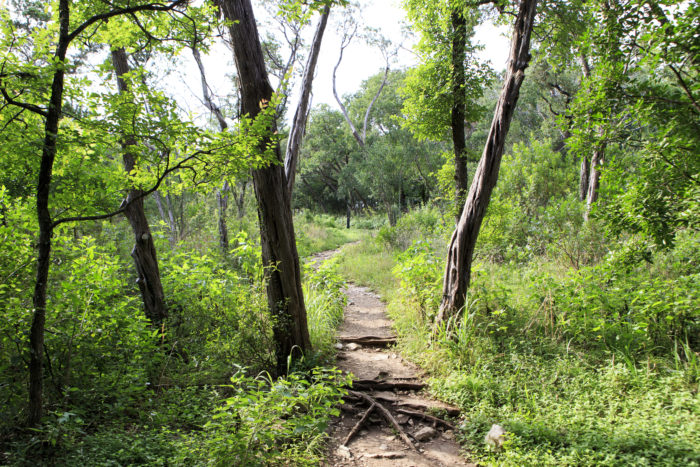 6. Mayfield Park Trail