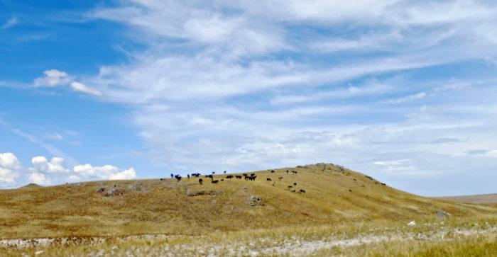Panorama_bleu_horses_and_hills