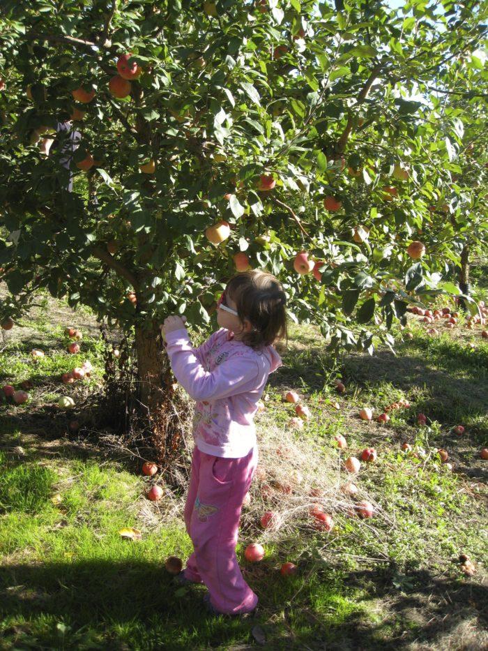6.  O'Farrell Orchards, Bigfork