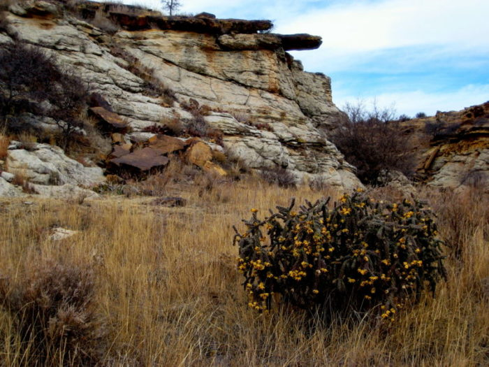 ...and Comanche National Grassland.