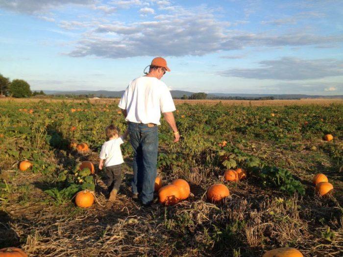 100 Pumpkin Patch Hayden Al Birmingham Area Fall