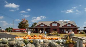 These 10 Charming Pumpkin Patches In Alabama Are Picture Perfect For A Fall Day
