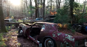 There's A Unique Boneyard Hiding In The Forest Where Vehicles Go To Die