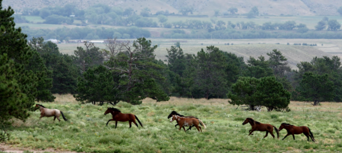 On your tour of the sanctuary, you can see the mustangs from a distance...