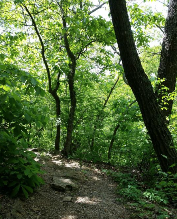 If you're looking to spend more time outdoors, head over to the beautiful Burr Oak Woods Conservation Area. Located just 7 miles aways in Blue Springs, this conservation boasts beautiful trails that are relatively easy to hike.