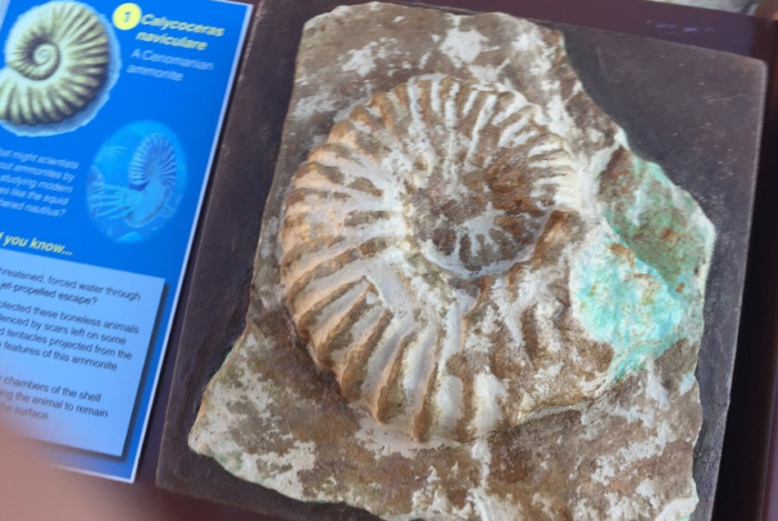 The end of the trail also offers a unique opportunity to get up close and personal with replicas of some of the already discovered fossils, allowing visitors a chance to touch and photograph these rare and historic gems.
