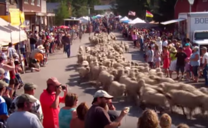 1. Running of the Sheep, Reed Point, 9/6
