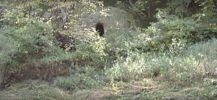 But there's something fascinating hiding in these woods. You can see it coming up from a distance: a sandstone cliff - which is very common in this area of Nebraska - with a hole in the front.