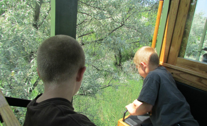 You can see the wild grasses and plants, and maybe even some animals, from the openness of the trolley itself. It's relaxing, enjoyable, and a great way to experience the park.