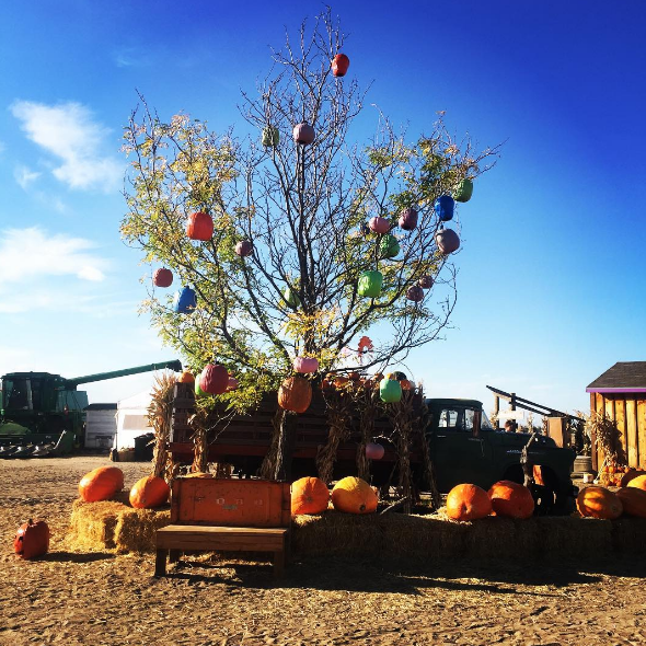 Most Haunted Places In Colorado Springs: 10 Best Pumpkin Patches In Colorado