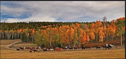 Paradise Ranch, Buffalo